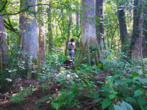 Malmaison Wildlife Management Area
